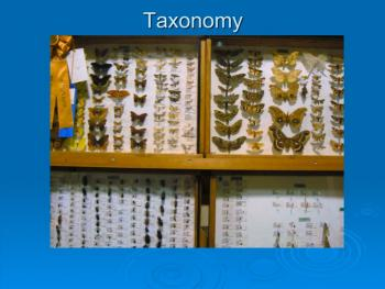 Butterflies to taxonomy case